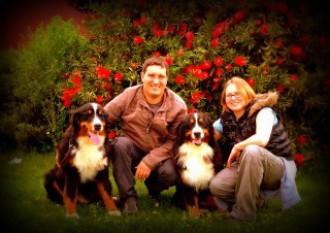 Boyero de Berna - Wikipedia,boyero,boyeros de berna,cachorros,bouvier bernois,España,bernese mountain dog,cachorro,galicia,Devael,