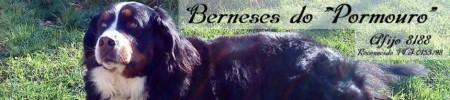 Boyero de Berna,Pormouro,cachorros de boyero de berna, cachorro,boyeros,kennel,España,sociedad canina española,F.C.I.,